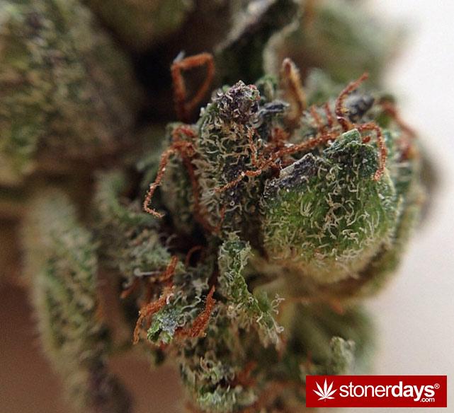 happy-420-stoned-marijuana (247)