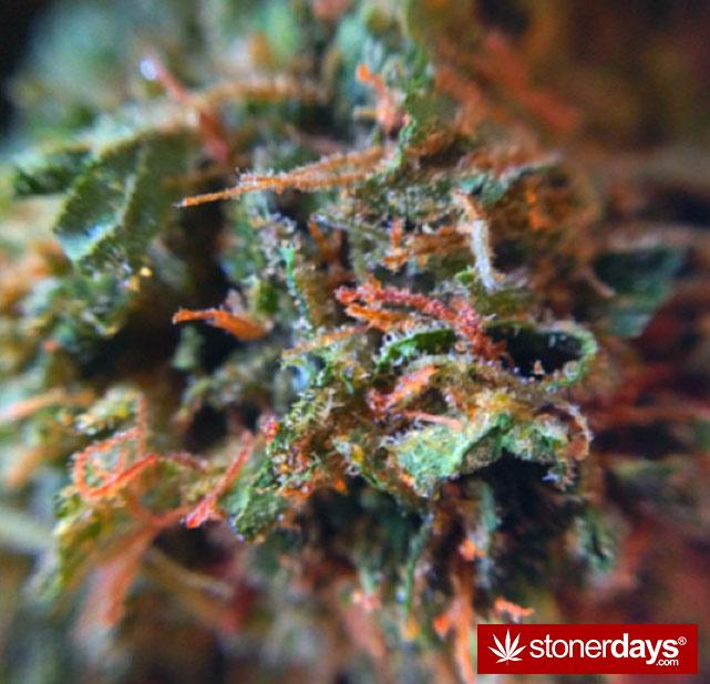 happy-420-stoned-marijuana (262)