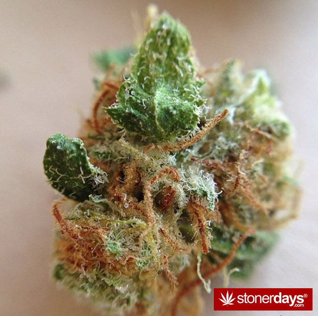 happy-420-stoned-marijuana (339)