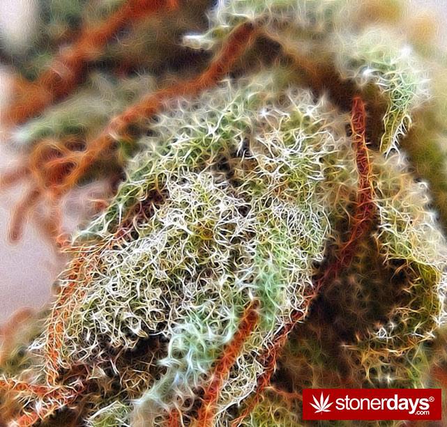happy-420-stoned-marijuana (374)