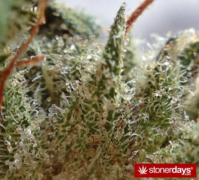 happy-420-stoned-marijuana (448)