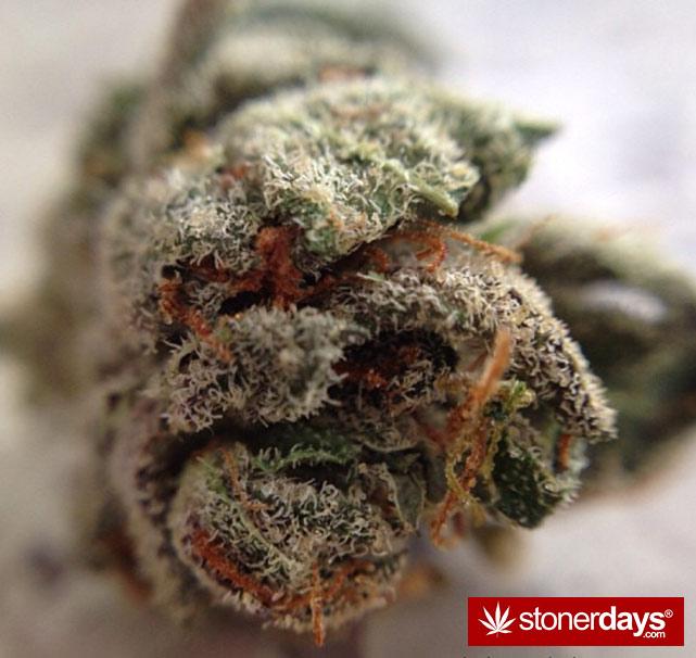 happy-420-stoned-marijuana (51)