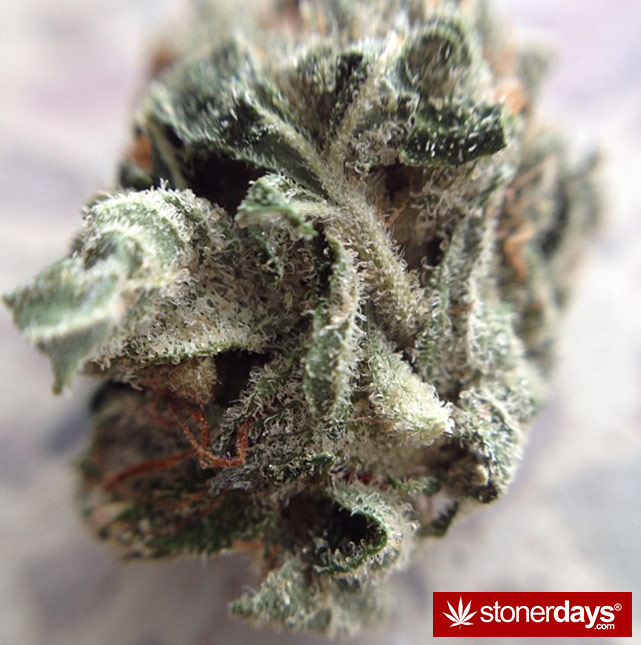 happy-420-stoned-marijuana (95)