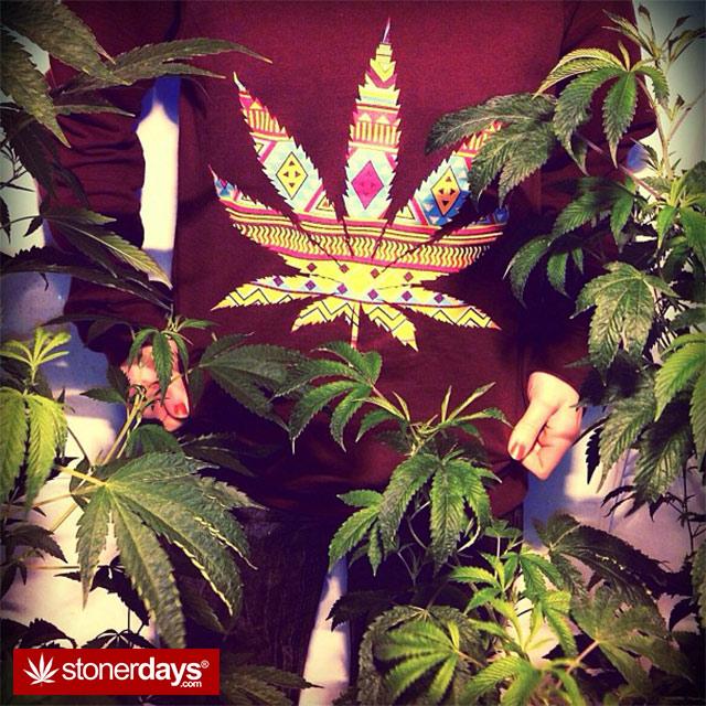 marijuana-pics (9)