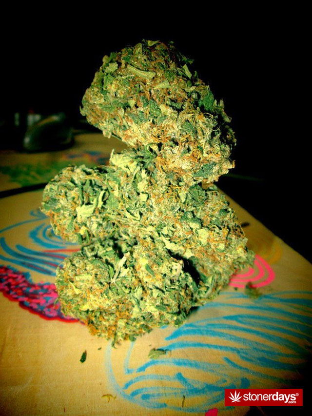 marijuana-pictures-(12)