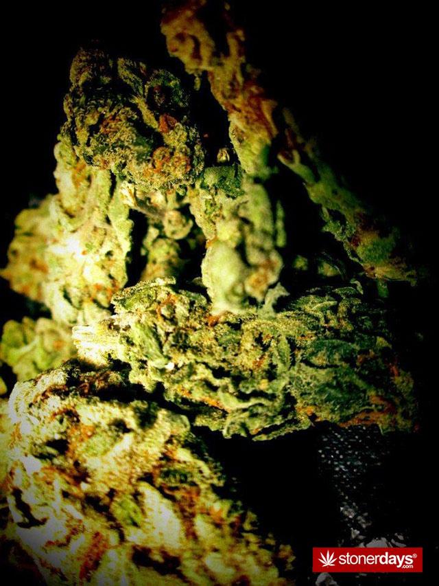 marijuana-pictures-(15)