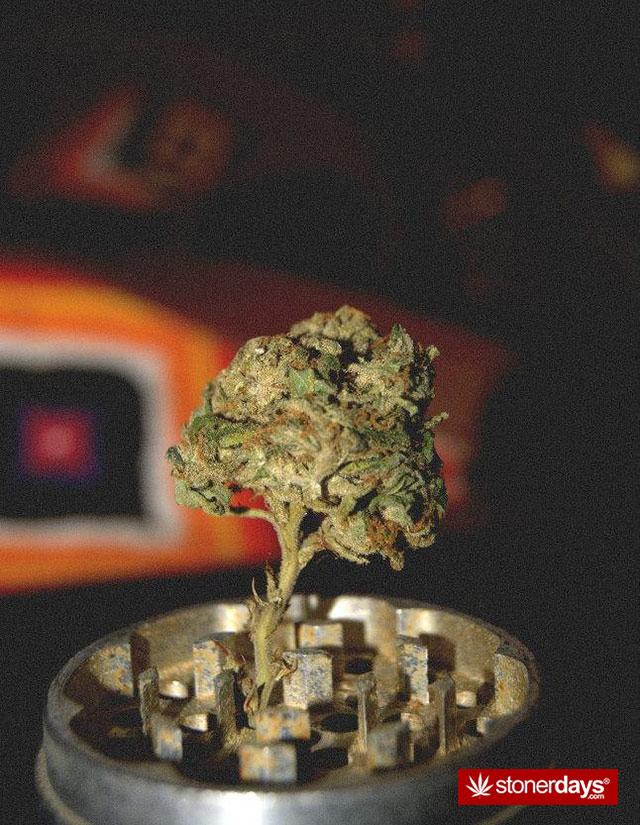 marijuana-pictures-(18)