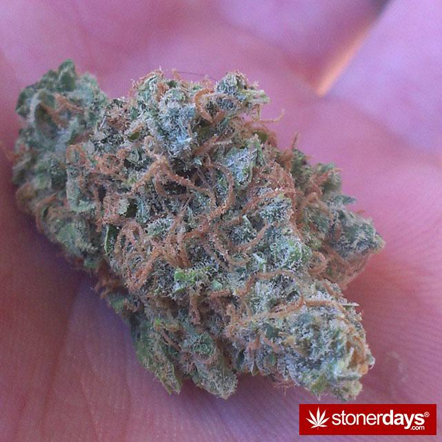 marijuana-stoner-stoned-girls (15)