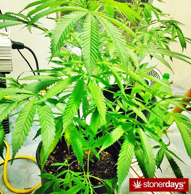 marijuana-stoner-stoned-girls (172)