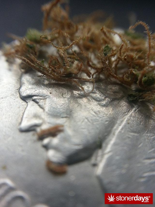smoke-weed-marijuana-pictures (102)