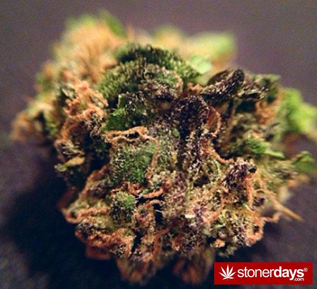 smoke-weed-marijuana-pictures (186)