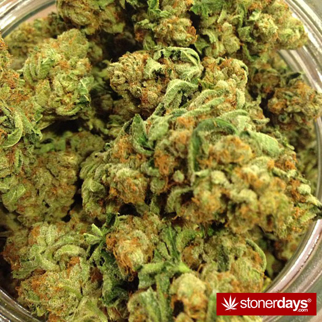 smoke-weed-marijuana-pictures (195)
