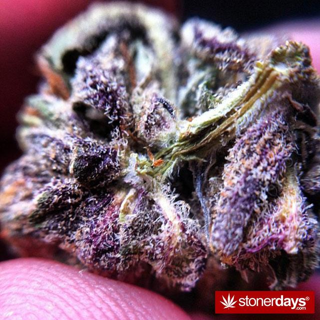 smoke-weed-marijuana-pictures (203)