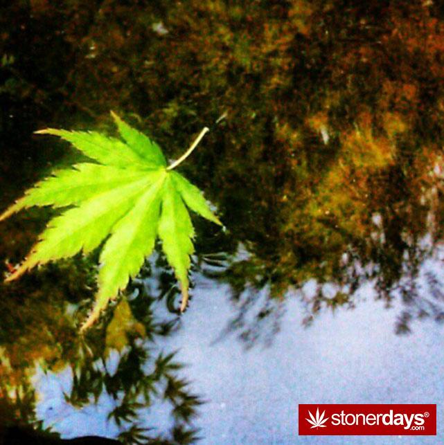 smoke-weed-marijuana-pictures (235)