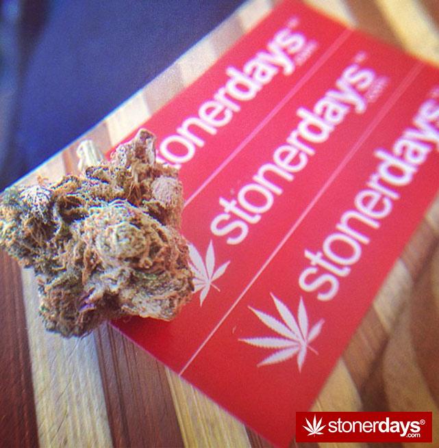 stoner-ganja-pothead-reefer (65)