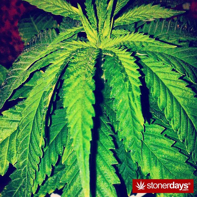 stoner-girls-smoking-weed (58)