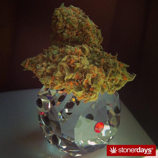 stoner-stoned-blazed-marijuana (168)