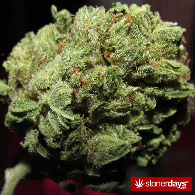 stoner-stoned-blazed-marijuana (42)