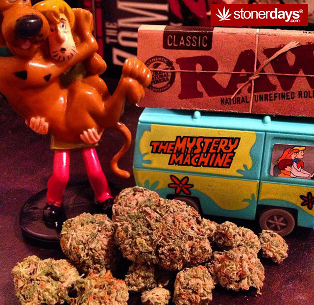 stoners-pics-of-pot-marijuana-pictures (340)