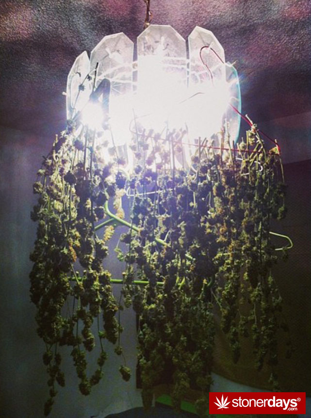 stoners-pics-of-pot-marijuana-pictures (341)