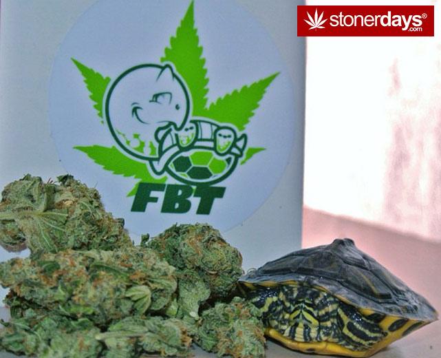 stoners-pics-of-pot-marijuana-pictures (343)