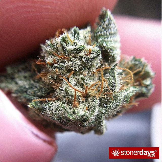 stoners-pics-of-pot-marijuana-pictures (47)