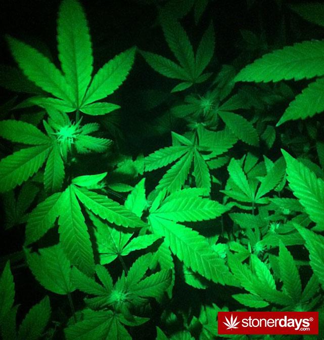 stoners-pics-of-pot-marijuana-pictures (714)