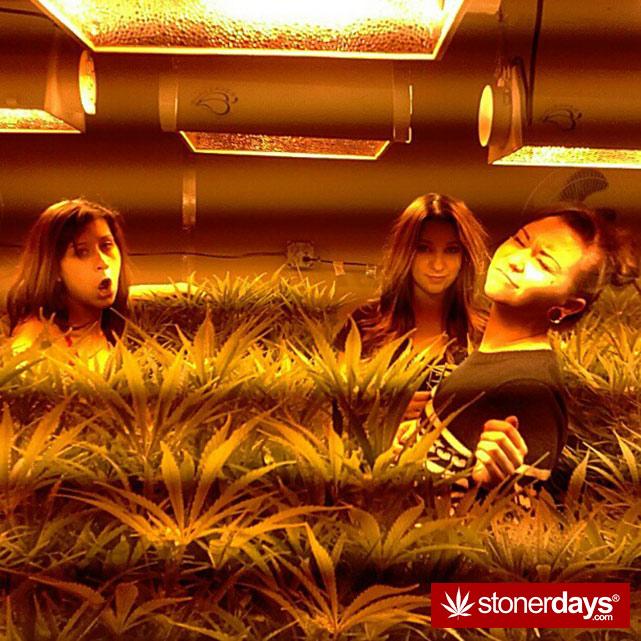 stoners-pics-of-pot-marijuana-pictures (856)