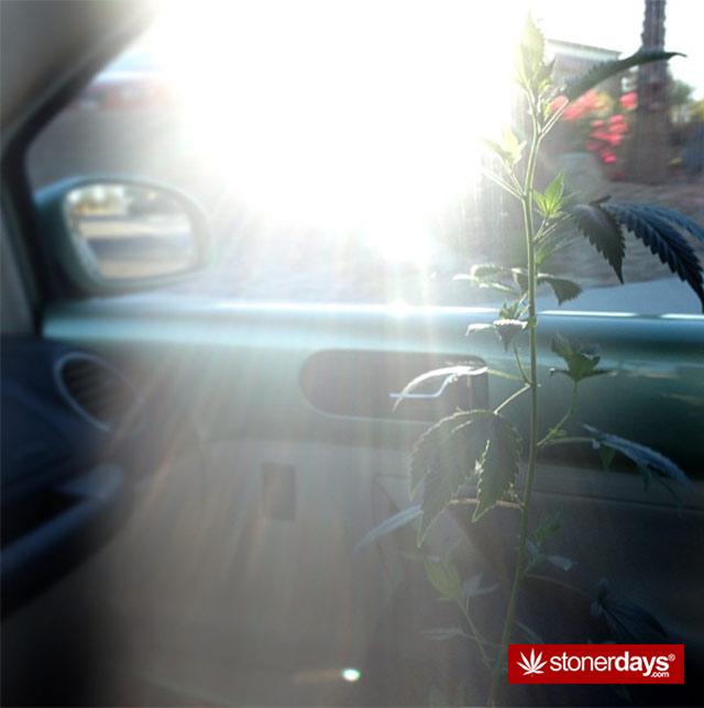 weed-stuff-marijuana-pictures (26)