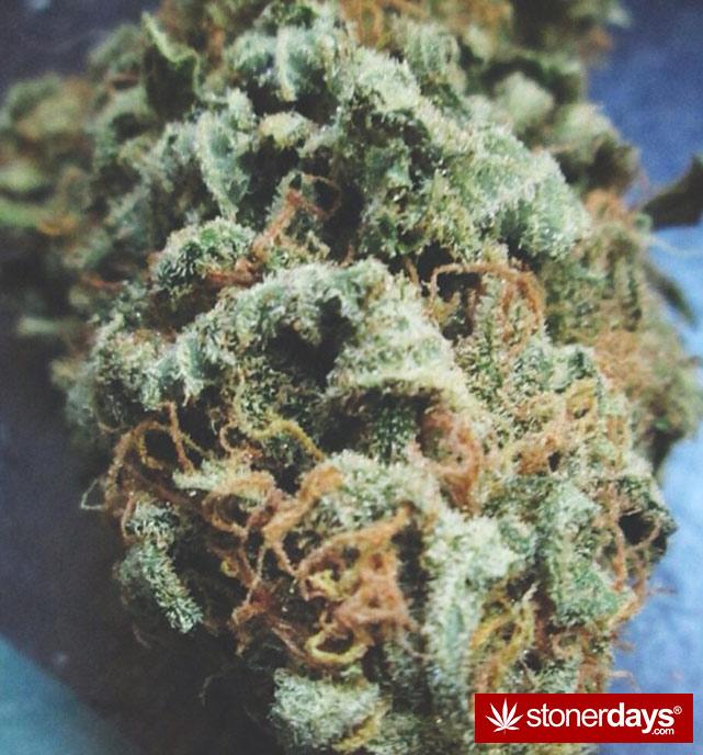 sexy-stoner-marijuana-pictures (211)