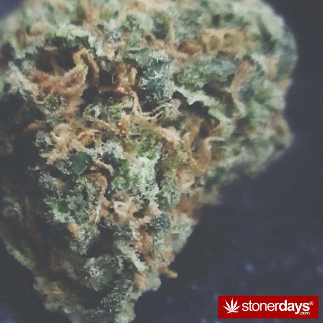 sexy-stoner-marijuana-pictures (226)