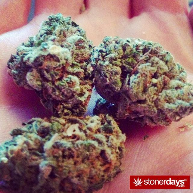 sexy-stoner-marijuana-pictures (244)