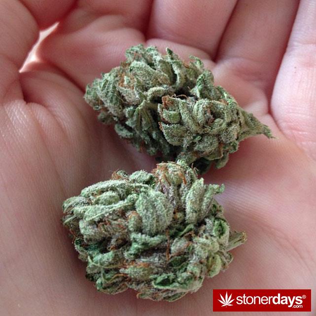 sexy-stoner-marijuana-pictures (292)