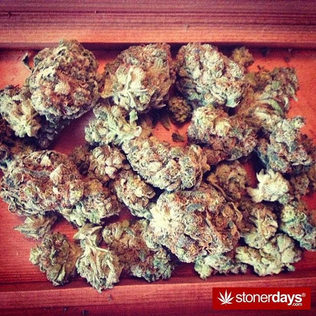 sexy-stoner-marijuana-pictures (309)