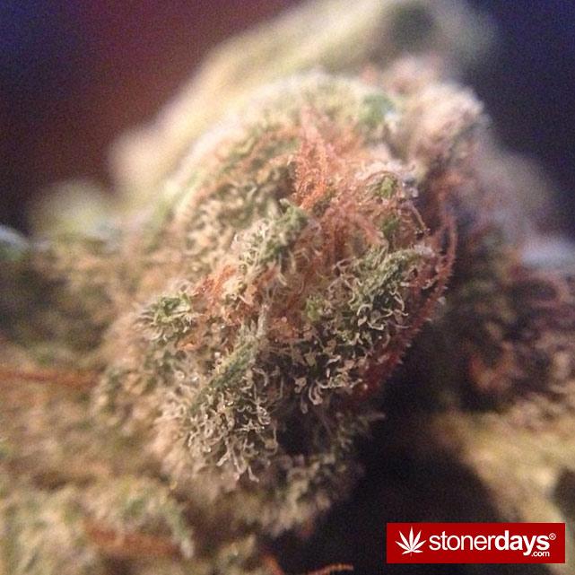 sexy-stoner-marijuana-pictures (32)