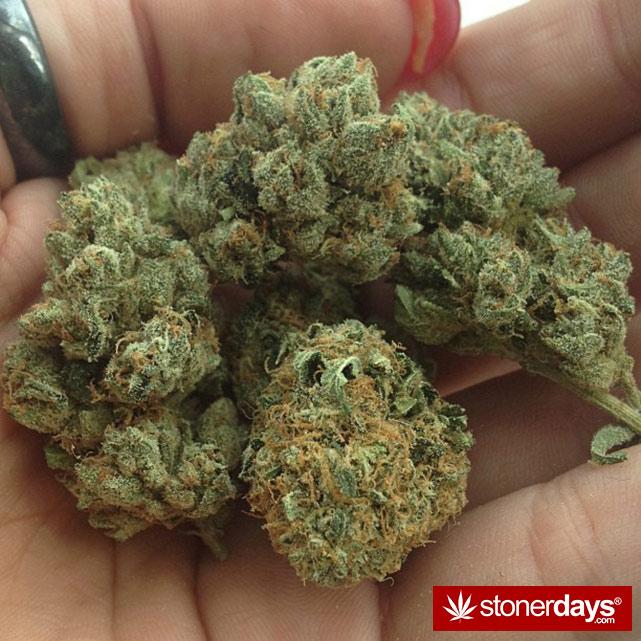 sexy-stoner-marijuana-pictures (384)