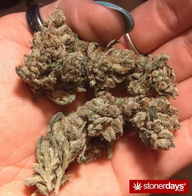 sexy-stoner-marijuana-pictures (408)