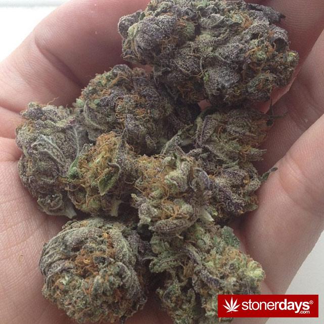 sexy-stoner-marijuana-pictures (416)