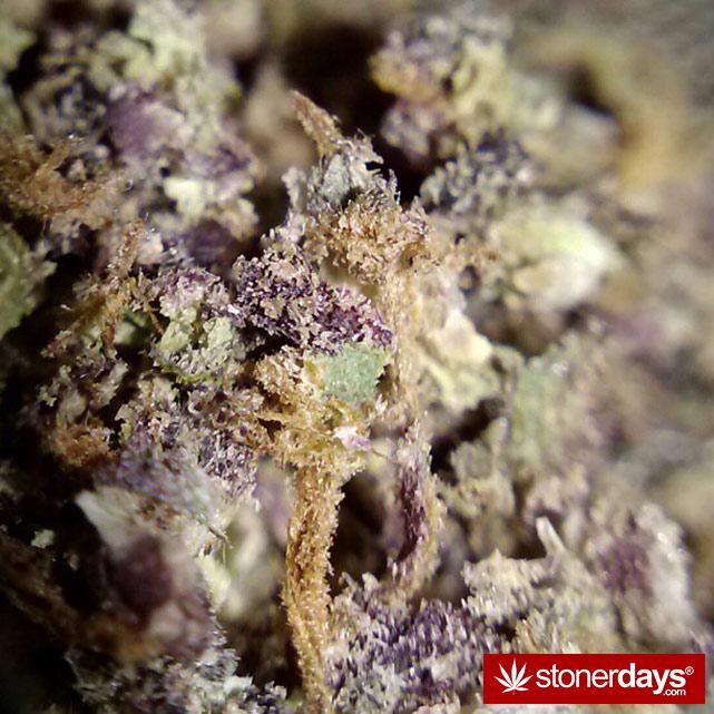 sexy-stoner-marijuana-pictures (6)