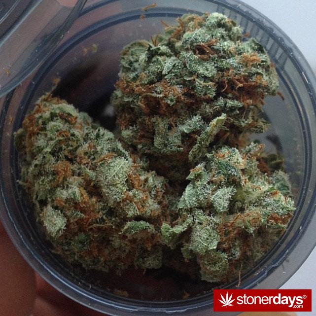 sexy-stoner-marijuana-pictures (76)