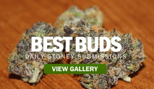 BEST-BUDS-STONERDAYS