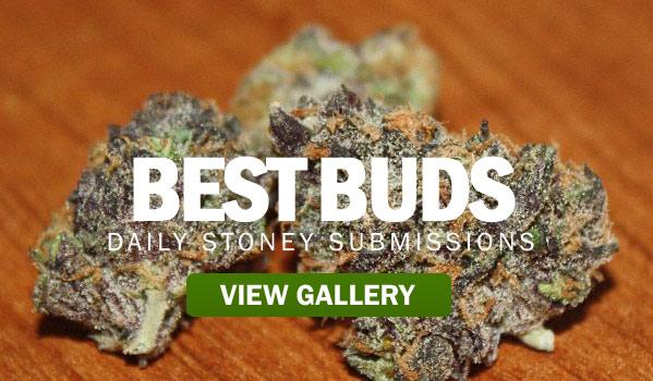 BEST-BUDS-STONERDAYS