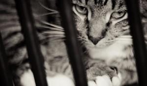 criminal-cat-stonerdays