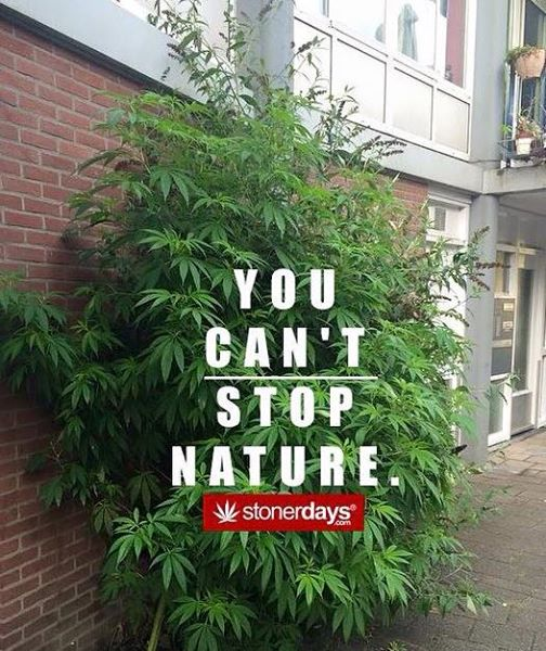 you cant stop nature marijuana picture