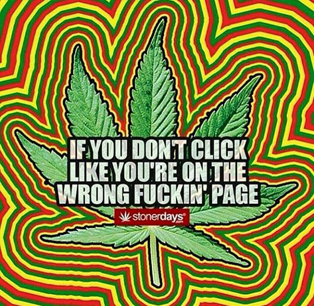if you dont click like your on the wrong fucking page stonerdays