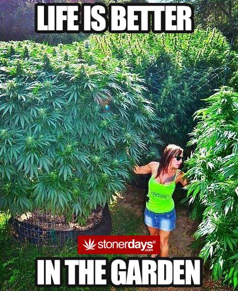 life is better in the weed garden