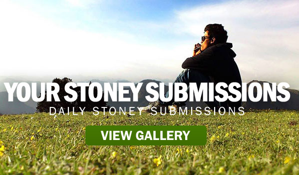 DAILY-SUBMISSIONS-VIEW-GALL