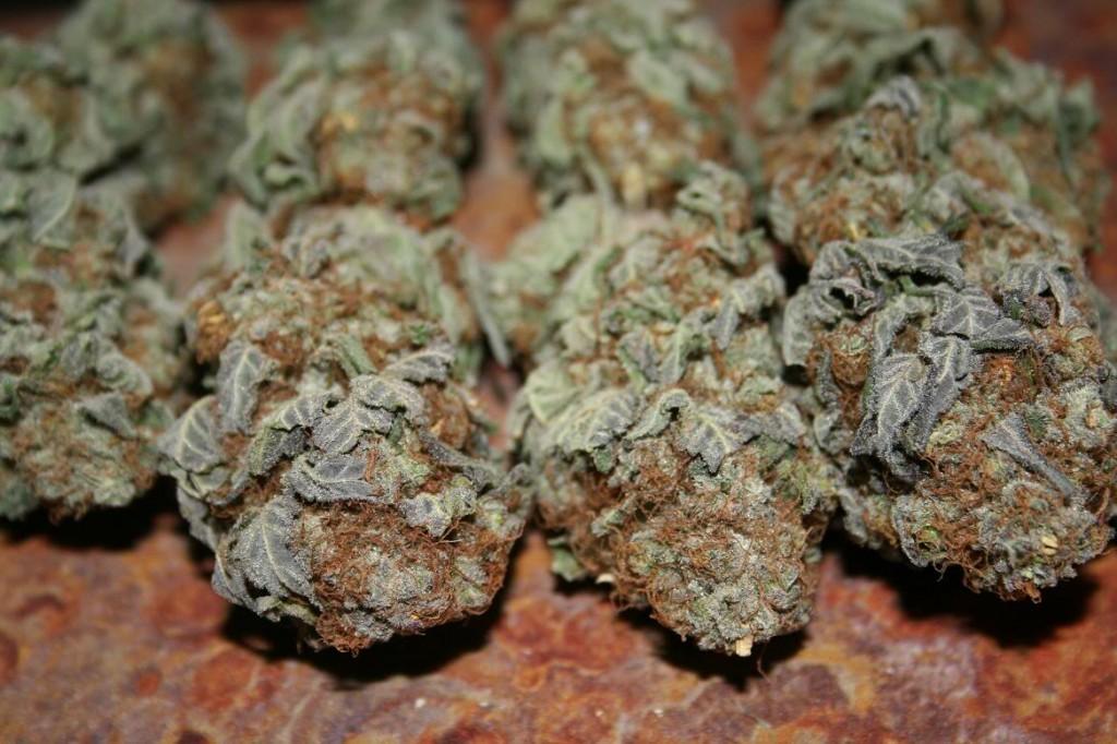 Dank Purp marijuana stoner dictionary stonerdays