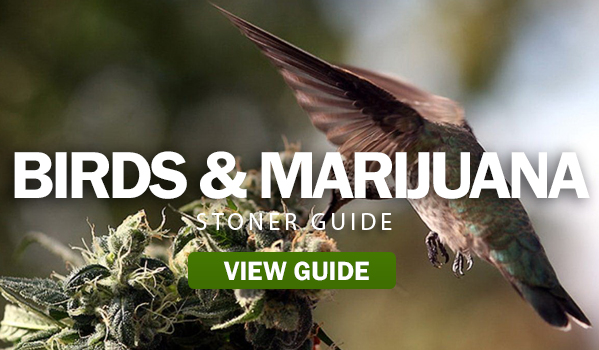 BIRDS-&-MARIJUANA