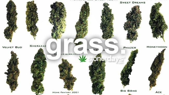 grass-marijuana-weed